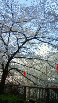 桜・桜・桜!!